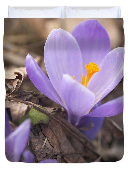First Crocus Blooms Duvet Cover