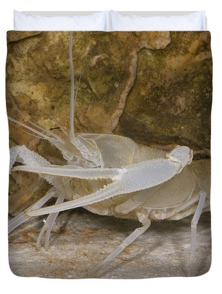Florida Cave Crayfish Duvet Cover