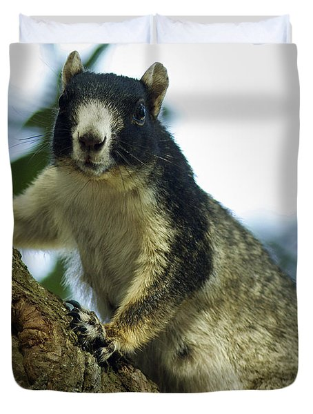 Fox Squirrel Duvet Cover by Phill Doherty