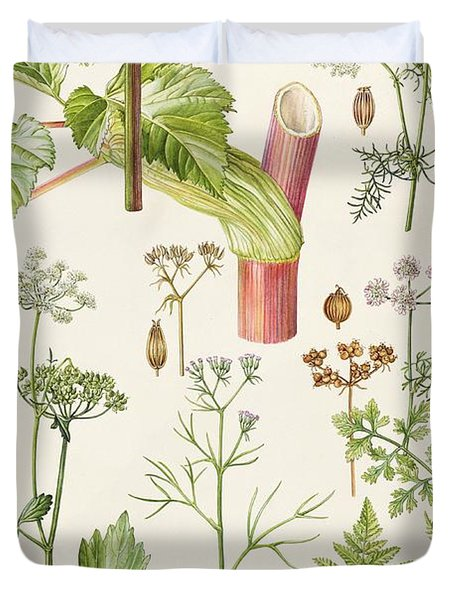 Garden Angelica And Other Plants  Duvet Cover by Elizabeth Rice
