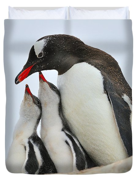 Gentoo Feeding Time Duvet Cover by Tony Beck