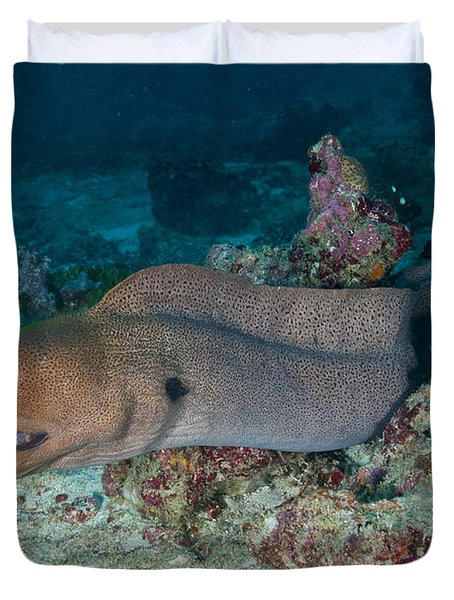 Giant Moray Eel Swimming Duvet Cover by Mathieu Meur