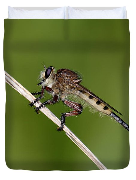Duvet Cover featuring the photograph Giant Robber Fly - Promachus Hinei by Daniel Reed