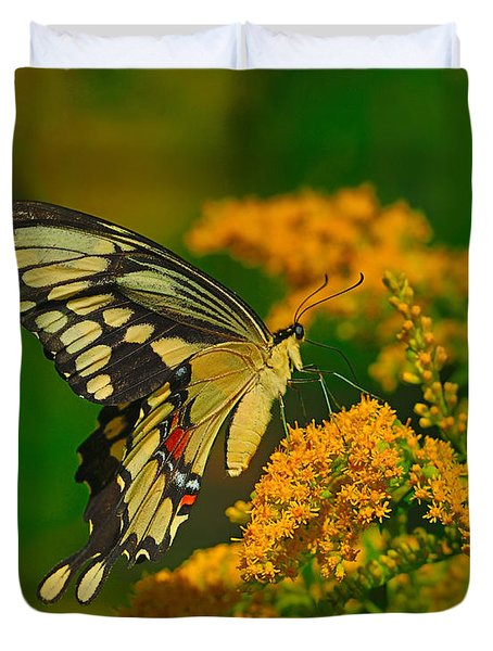 Giant Swallowtail On Goldenrod Duvet Cover by Tony Beck