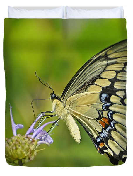 Giant Swallowtail Duvet Cover by Rodney Campbell