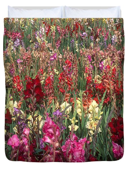 Gladioli Garden In Early Fall Duvet Cover by Yva Momatiuk and John Eastcott and Photo Researchers