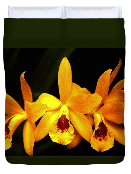 Golden Cattleya Duvet Cover by Rosalie Scanlon