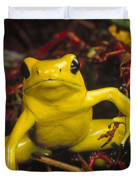 Golden Poison Dart Frog Phyllobates Duvet Cover by Mark Moffett
