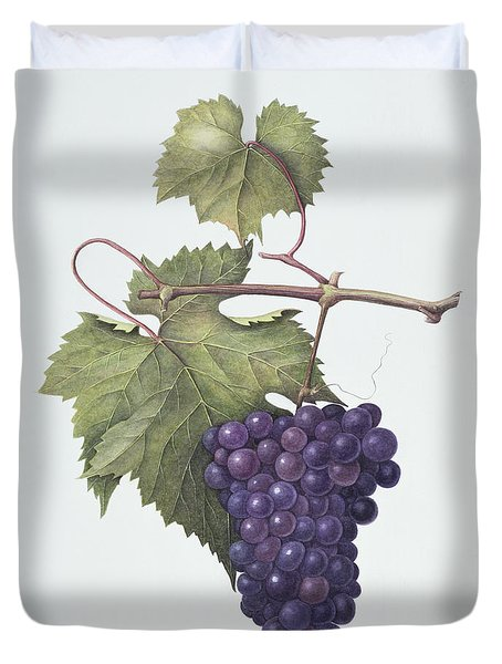 Grapes  Duvet Cover by Margaret Ann Eden