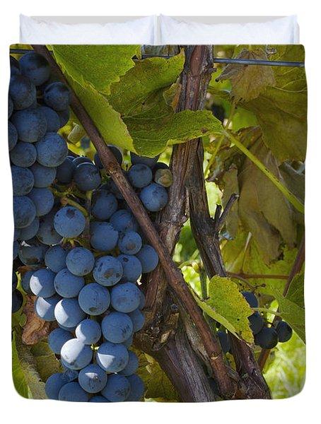 Grapes On A Vine Sutton Junction Quebec Duvet Cover by David Chapman