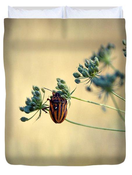 Graphosoma Lineatum Duvet Cover by Stelios Kleanthous