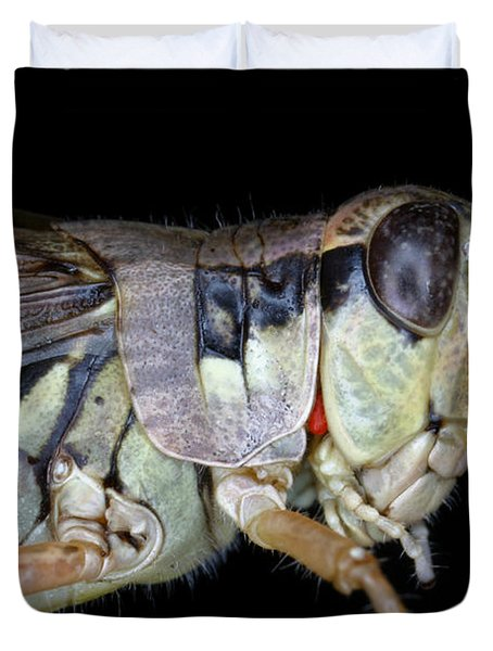 Grasshopper With Parasitic Mite Duvet Cover by Ted Kinsman