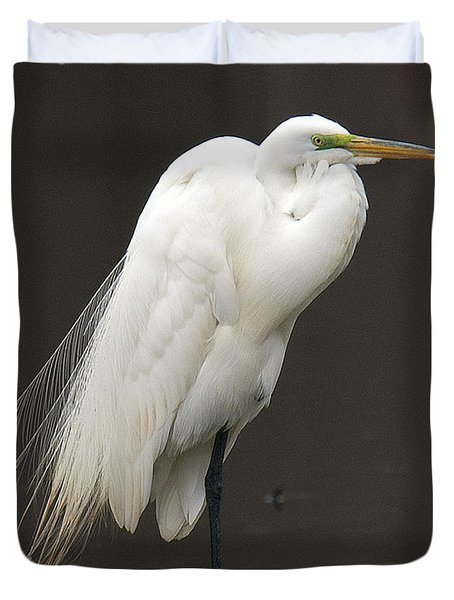 Great Egret Resting Dmsb0036 Duvet Cover