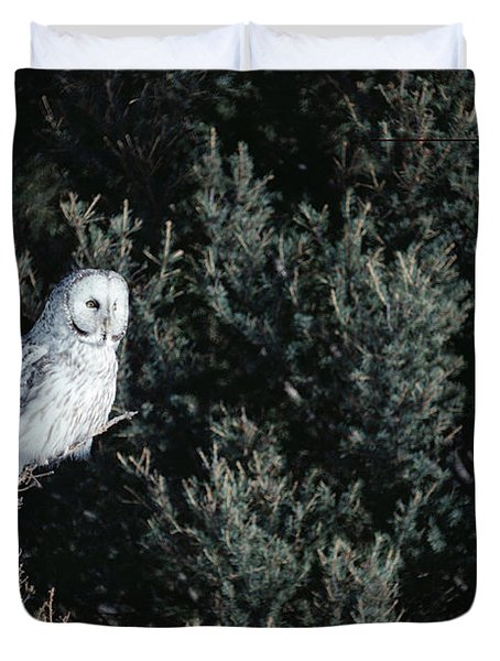 Great Gray Owl Strix Nebulosa In Blonde Duvet Cover by Michael Quinton