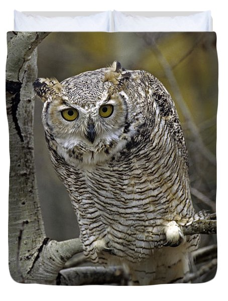 Great Horned Owl Pale Form Kootenays Duvet Cover by Tim Fitzharris