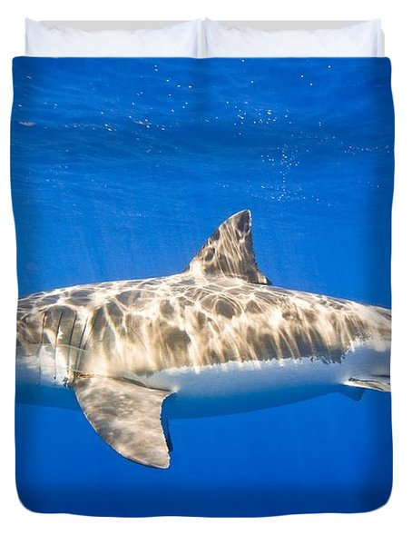 Great White Shark Carcharodon Carcharias Duvet Cover by Carson Ganci