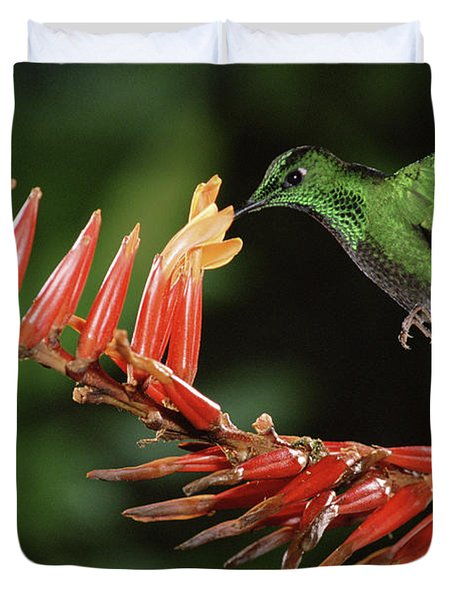 Green-crowned Brilliant Heliodoxa Duvet Cover by Michael & Patricia Fogden