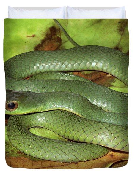 Green Racer Drymobius Melanotropis Amid Duvet Cover by Michael & Patricia Fogden