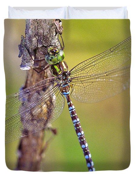 Green-striped Darner Dragonfly Duvet Cover