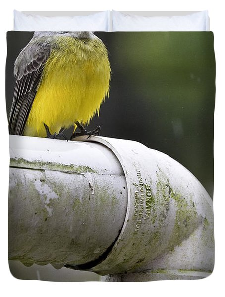 Grey-capped Flycatcher Duvet Cover by Heiko Koehrer-Wagner