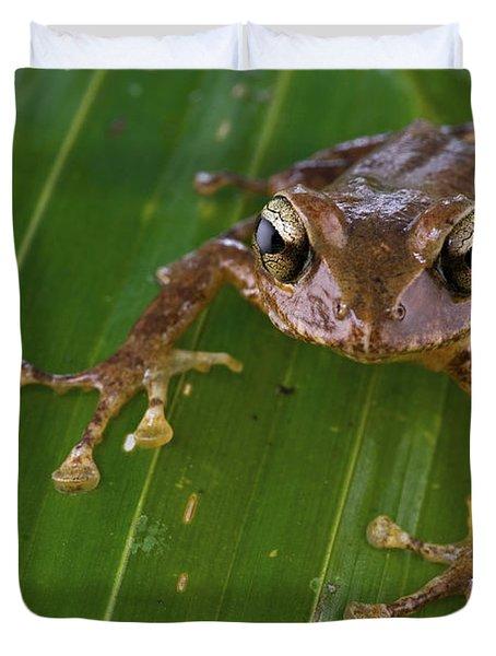 Ground Frog Nakanai Mts Papua New Guinea Duvet Cover by Piotr Naskrecki