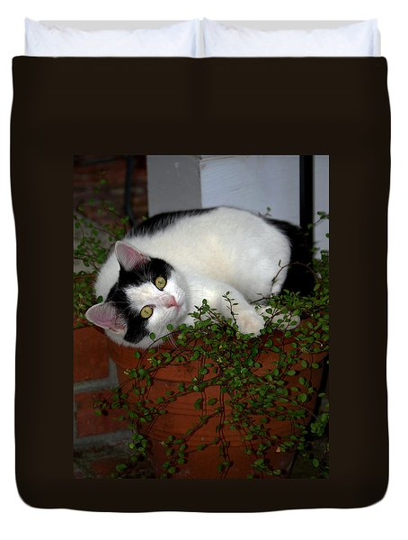 Growing A Kitten Duvet Cover by Skip Willits