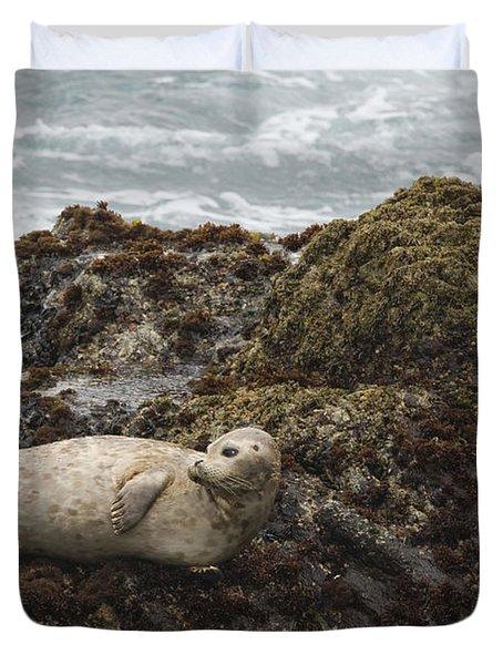 Harbor Seal  Point Lobos State Reserve Duvet Cover by Sebastian Kennerknecht