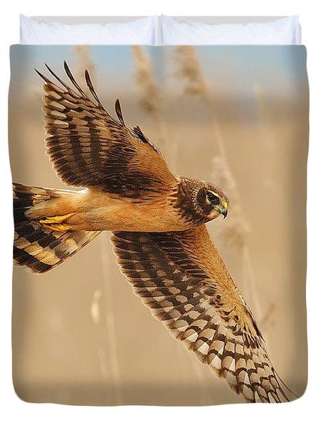 Harrier Over Golden Grass Duvet Cover