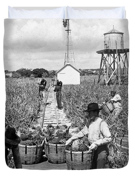 Harvesting Indian River Pineapples - C 1906 - Florida Duvet Cover by International  Images