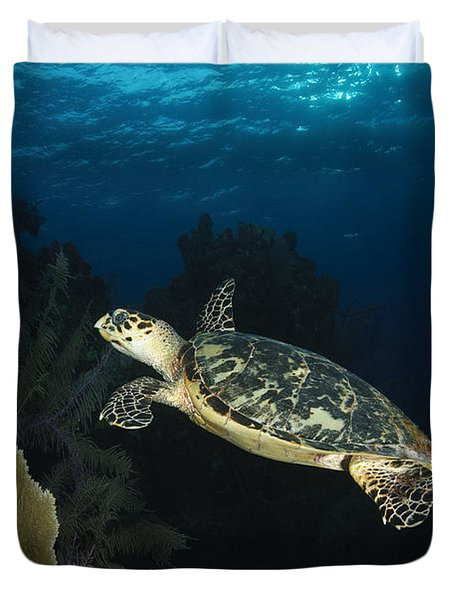 Hawksbill Sea Turtle Swimming Duvet Cover by Todd Winner