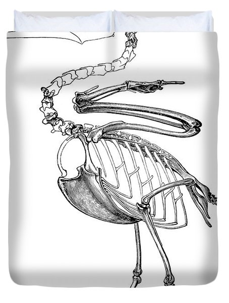Hesperornis Duvet Cover by Science Source