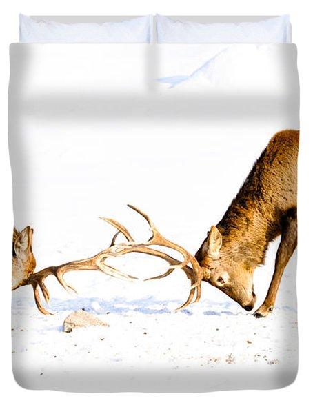 Horns A Plenty Duvet Cover by Cheryl Baxter