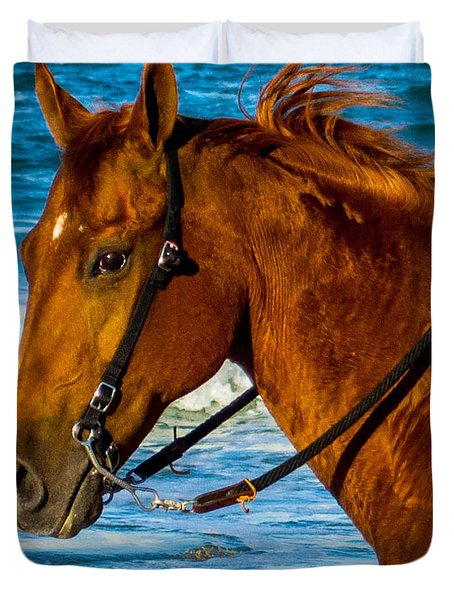 Horse Portrait  Duvet Cover by Shannon Harrington