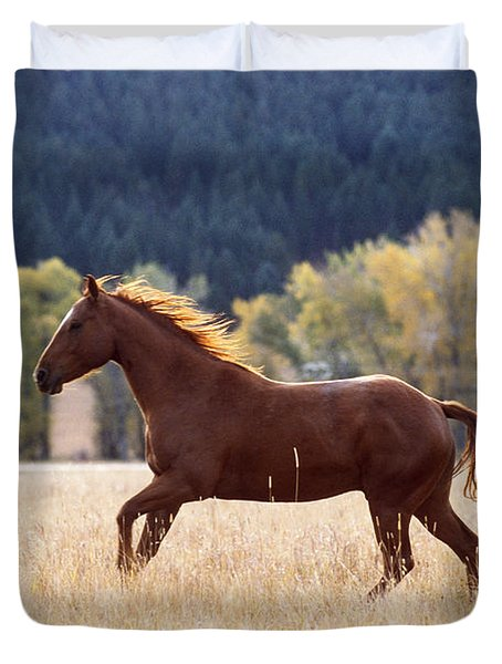 Horse Running Duvet Cover by Alan and Sandy Carey and Photo Researchers