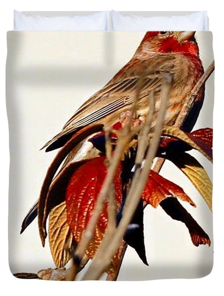 Duvet Cover featuring the photograph House Finch Perch by Elizabeth Winter