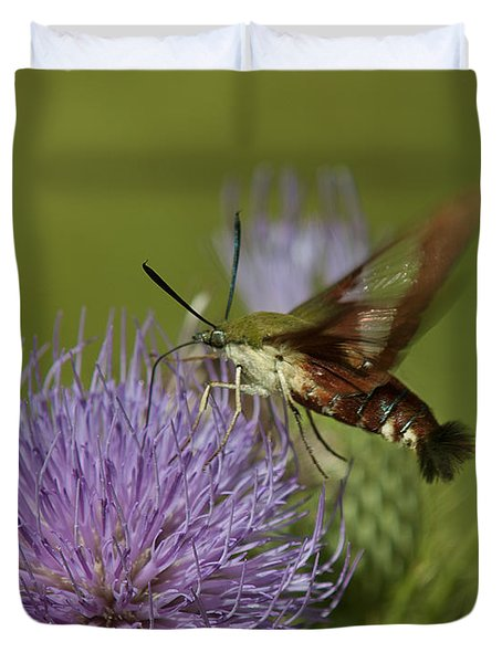 Hummingbird Or Clearwing Moth Din178 Duvet Cover by Gerry Gantt