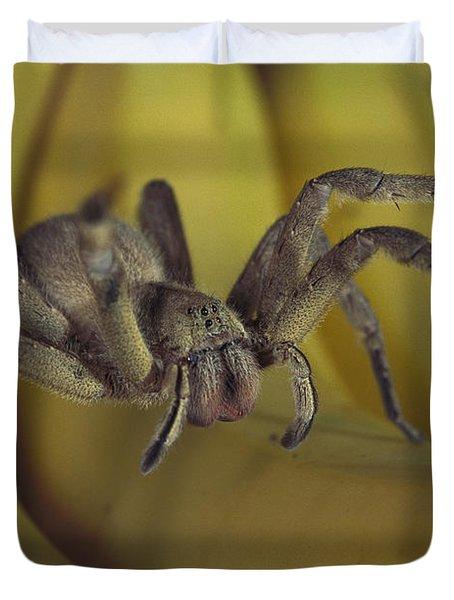 Hunting Spider Cupiennius Salei Walking Duvet Cover by Heidi & Hans-Juergen Koch