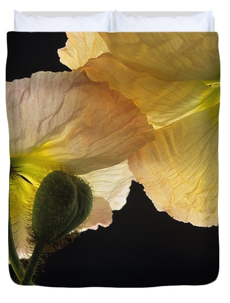 Iceland Poppies 2 Duvet Cover