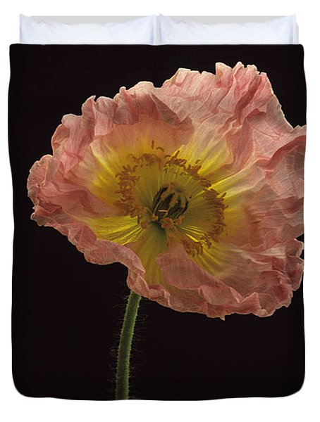 Iceland Poppy 3 Duvet Cover