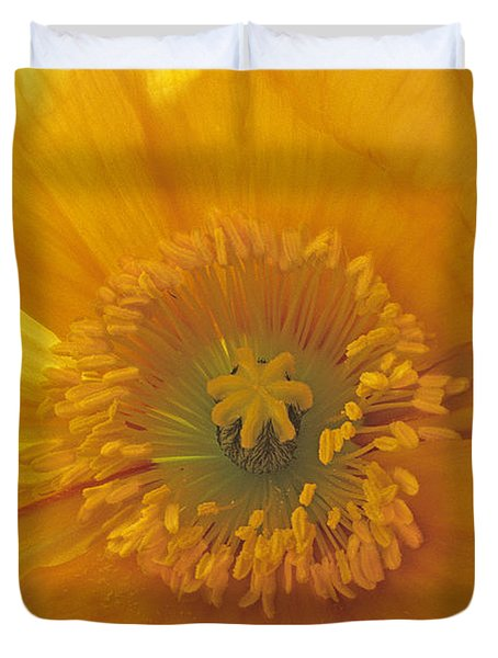 Iceland Poppy 4 Duvet Cover