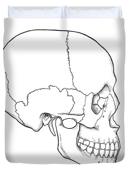 Illustration Of Human Skull Duvet Cover by Science Source