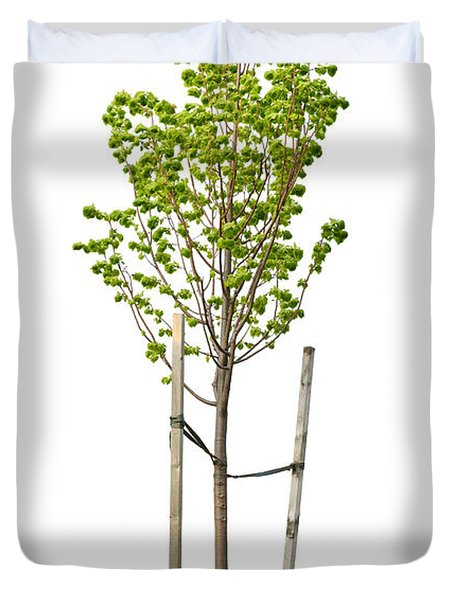 Isolated Young Linden Tree Duvet Cover by Elena Elisseeva