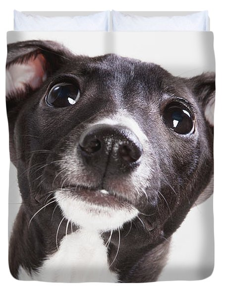 Italian Greyhound Puppy Spruce Grove Duvet Cover by Leah Bignell