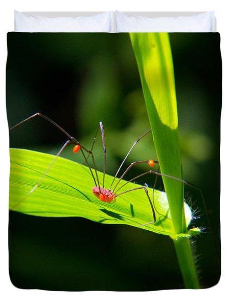 Itsy Bitsy Spider Duvet Cover