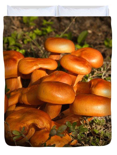 Jack Olantern Mushrooms 30 Duvet Cover by Douglas Barnett