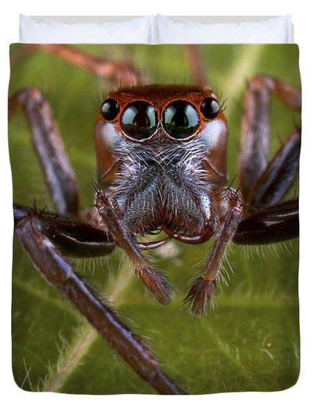 Jumping Spider Papua New Guinea Duvet Cover by Piotr Naskrecki