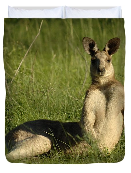 Kangaroo Playing It Cool Duvet Cover by Bob Christopher