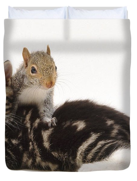 Kitten And Squirrel Duvet Cover by Jane Burton