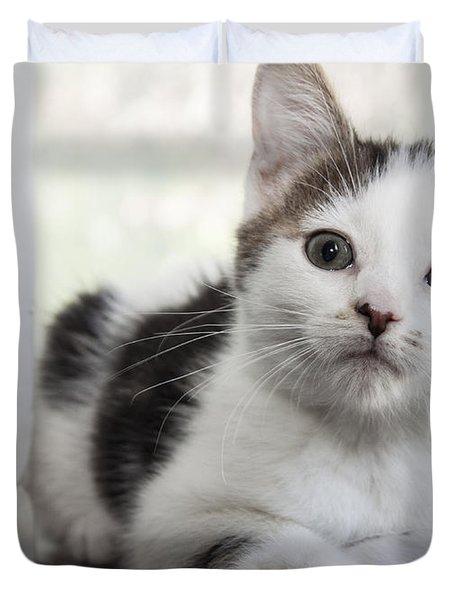 Kitten In The Window Duvet Cover