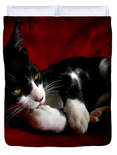 Kitten On Red Take Two Duvet Cover by Maggy Marsh